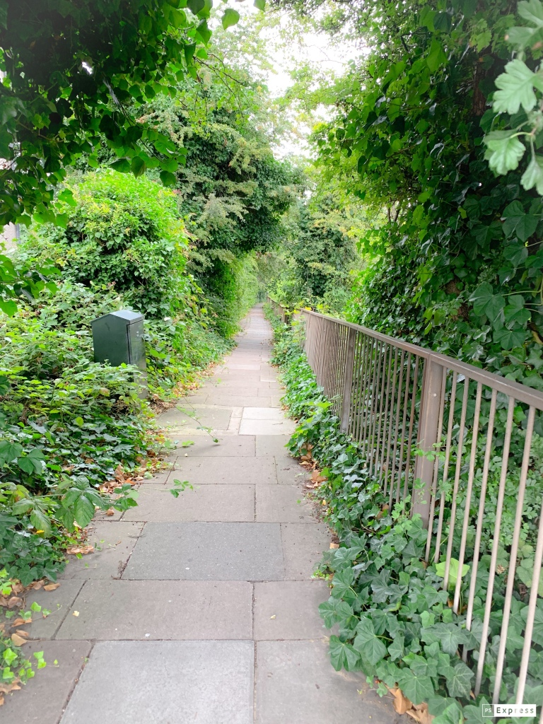 Nature photography featuring a pathway surrounded by trees and bushes, and a grey iron fence along the right hand side.
