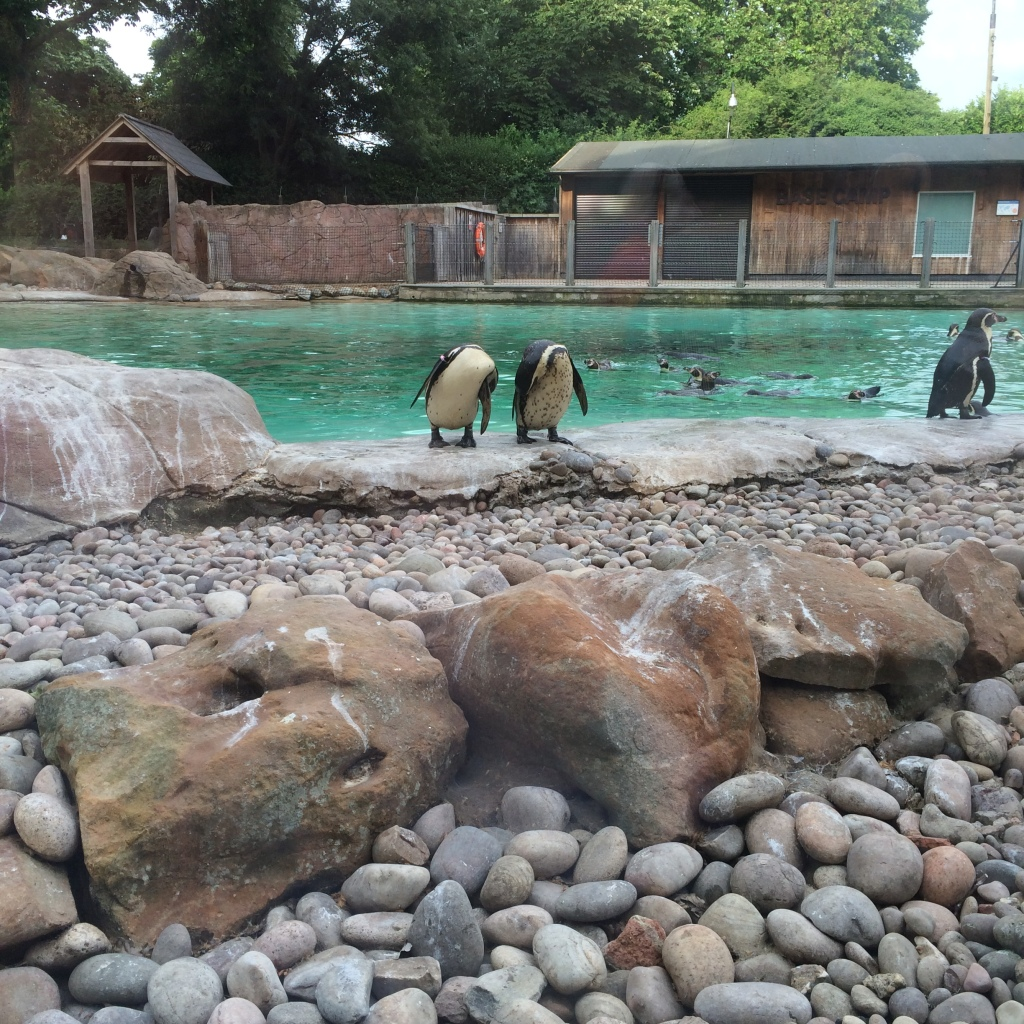 Penguins standing next to each other at London Zoo