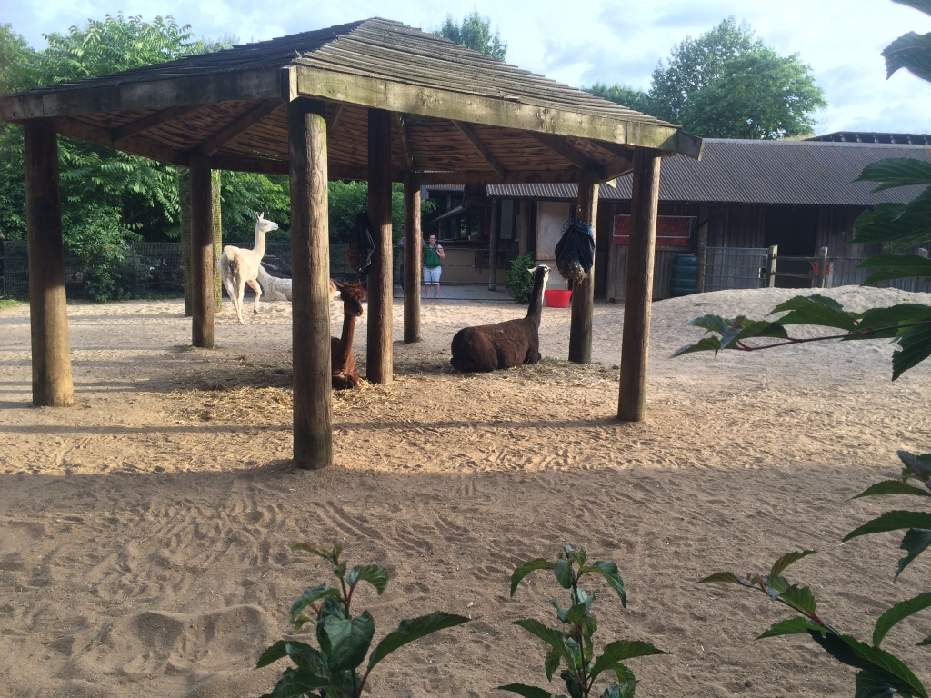 Some animals in their enclosure at London Zoo