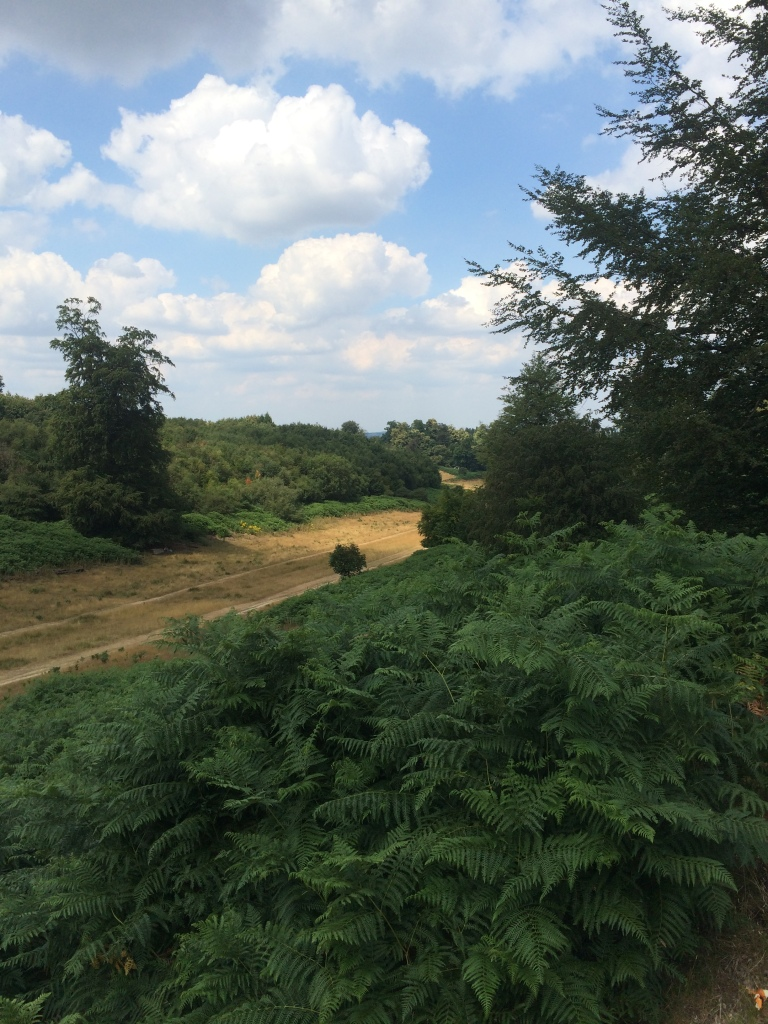 A view from Knole Park, Sevenoaks UK of the trees and bushes.