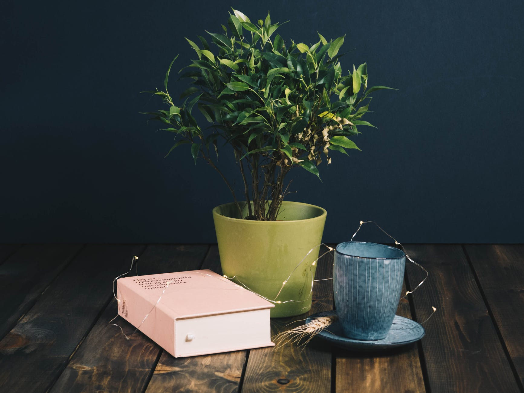 A photography pic of a pink book next to a green plant pot with a tree in it and next to that a blue cup and saucer. All with fairy lights laying over it.